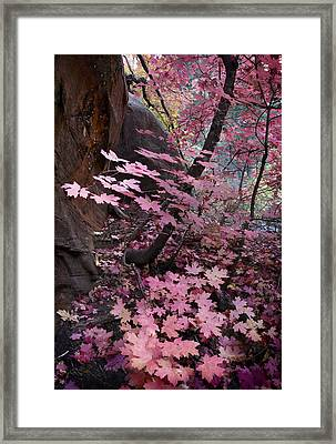 West Fork Fall Colors Framed Print by Dave Dilli