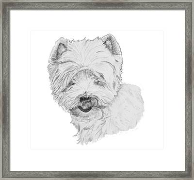 West Highland Terrier Drawing Framed Print by Catherine Roberts