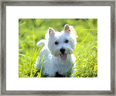 West Highland White Terrier Painting Framed Print by Marvin Blaine