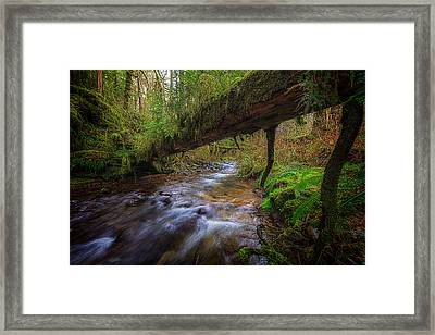West Humbug Creek Framed Print by Everet Regal