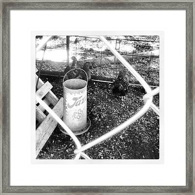 West Point, Ms - Chicken - The Musical Framed Print