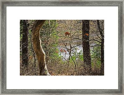 West Pond In The Woods Framed Print by Frank Winters