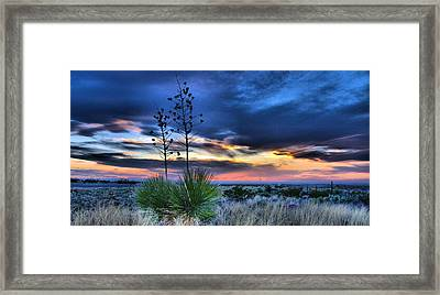 West Texas Yuccas Framed Print