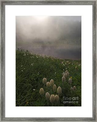 Western Anenome Dawn Framed Print