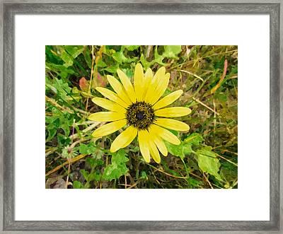 Western Australian Yellow Wildflowers Framed Print by Lanjee Chee