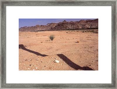 Western Cape  South Africa 1996 Framed Print