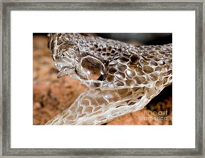 Western Diamondback Snake Skin Framed Print by Gregory G. Dimijian, M.D.