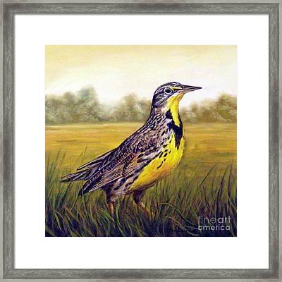 Western Meadowlark Afternoon Framed Print by Tom Chapman