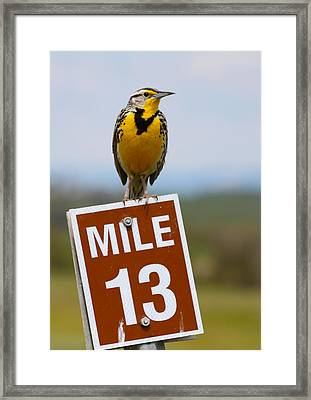 Western Meadowlark On The Mile 13 Sign Framed Print
