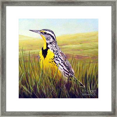 Western Meadowlark Framed Print by Tom Chapman