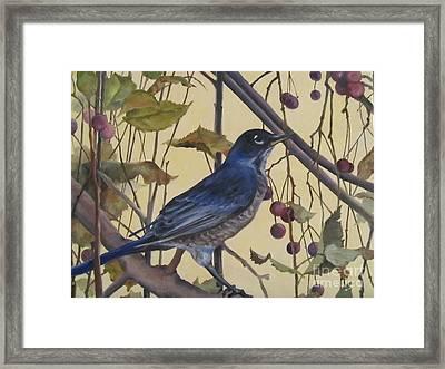 Western Robin Framed Print by Karen Olson