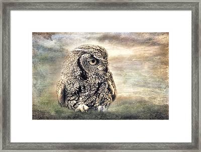 Western Screech Owl Framed Print by Barbara Manis