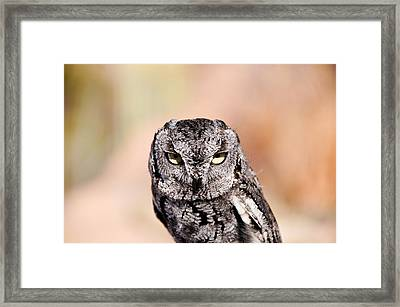 Western Screech Owl Framed Print by Bonnie Fink