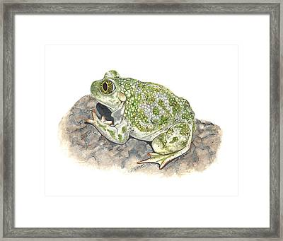 Western Spadefoot Framed Print by Cindy Hitchcock
