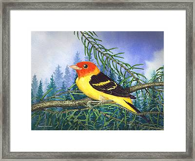 Western Tanager In Yosemite Framed Print