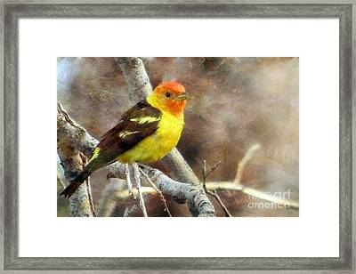 Western Tanager Framed Print by Irina Hays
