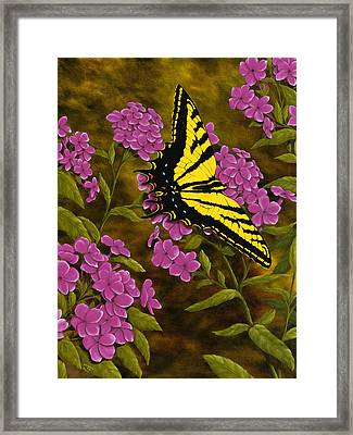 Western Tiger Swallowtail And Evening Phlox Framed Print