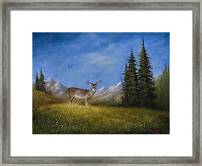 Western Whitetail Framed Print by C Steele