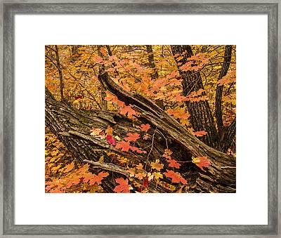 Westfork Foilage Framed Print by Tom Kelly