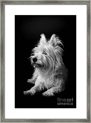 Westie II Framed Print by Catherine Reusch Daley