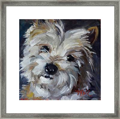 Westie Mix Framed Print