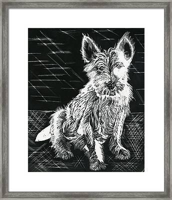 Westie Framed Print by Phyllis Muller