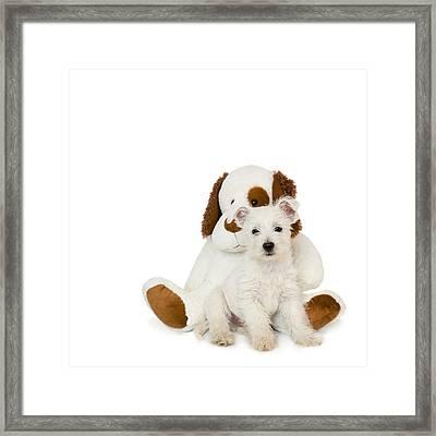 Westie Puppy And Teddy Bear Framed Print by Natalie Kinnear