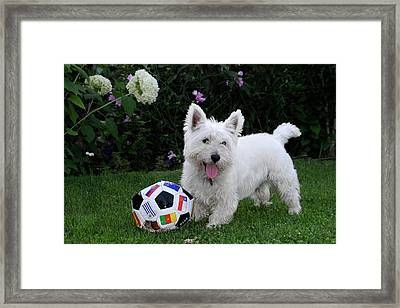 Westie World Cup Framed Print by Geraldine Alexander