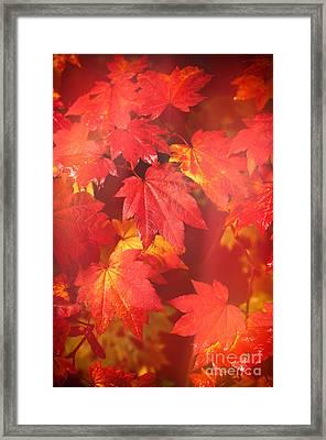 Westonbirt Arboretum Abstract Framed Print