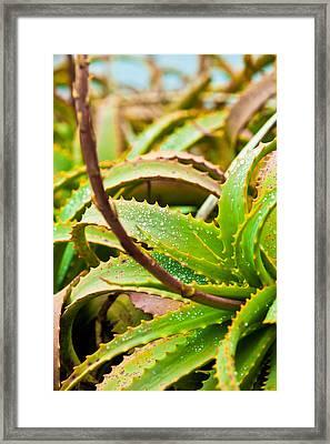 After The Rain Framed Print by Melinda Ledsome