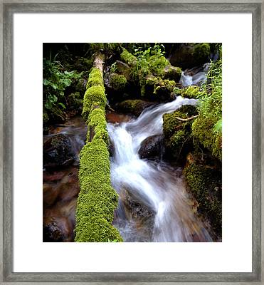 Wet And Green Framed Print