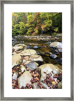 Wet Autumn Day Framed Print by Thomas R Fletcher