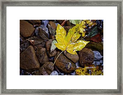 Wet Autumn Leaf On Stones Framed Print