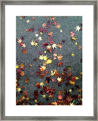 Wet Autumn Framed Print by Lora Lee Chapman