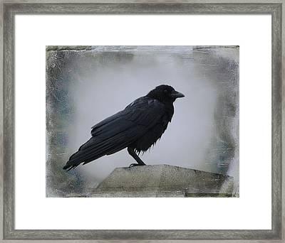 Lone Wet Blackbird Framed Print
