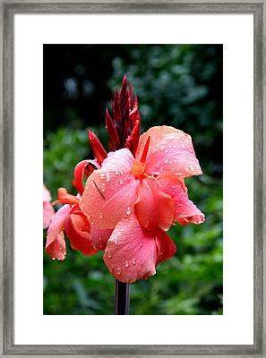 Wet Canna Framed Print