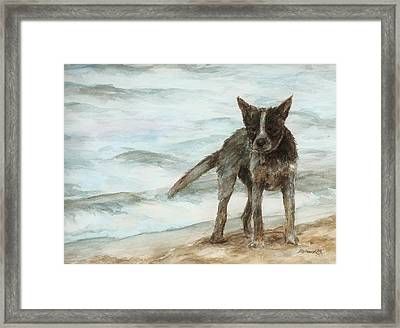 Wet Dog - Cattle Dog Framed Print