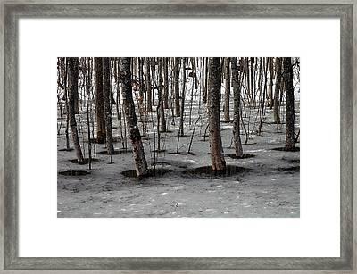 Wet Feets Framed Print