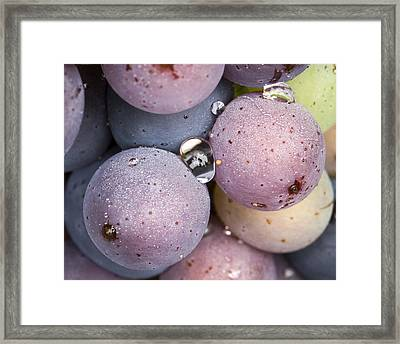 Wet Fruit Framed Print