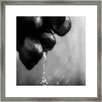 Wet Grapes Framed Print by Bob Orsillo