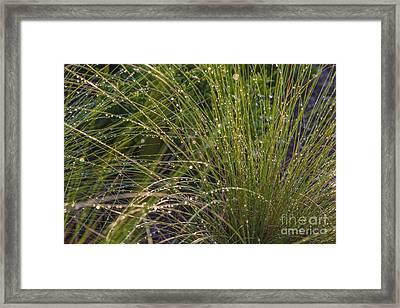 Wet Grass Framed Print by Juan  Silva
