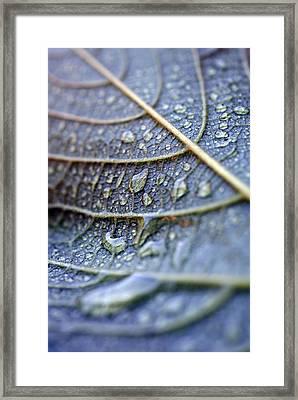 Wet Leaf Framed Print