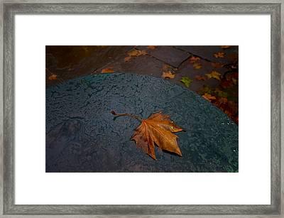 Wet Leaf Framed Print by Mike Horvath