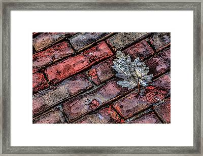 Wet Leaf Road Framed Print