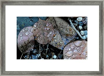 Wet Leaves Framed Print
