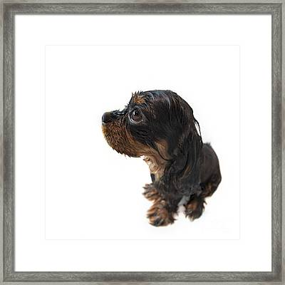 Wet Marmaduke Fisheye Framed Print