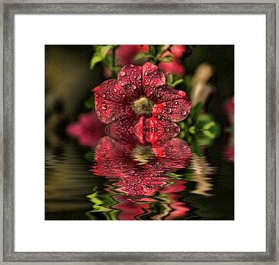 Wet Petunia Framed Print