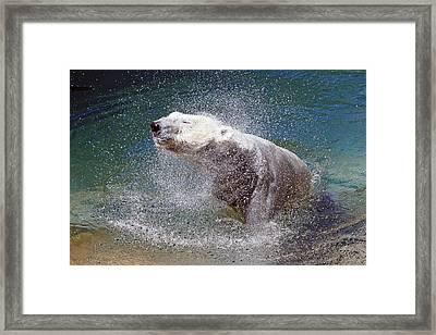 Wet Polar Bear Framed Print