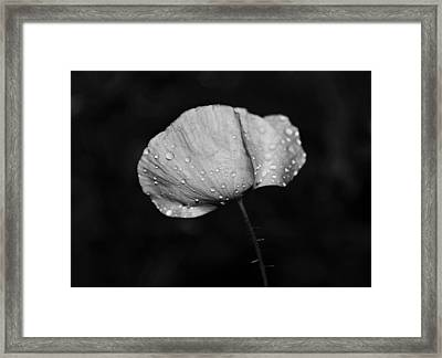 Wet Poppy  Framed Print