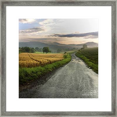 Wet Road Through Fields Of Wheat. Auvergne. France. Framed Print by Bernard Jaubert